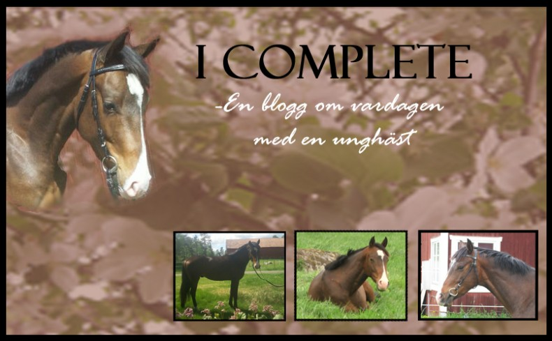 I Complete, en blogg om vardagen med en unghäst.